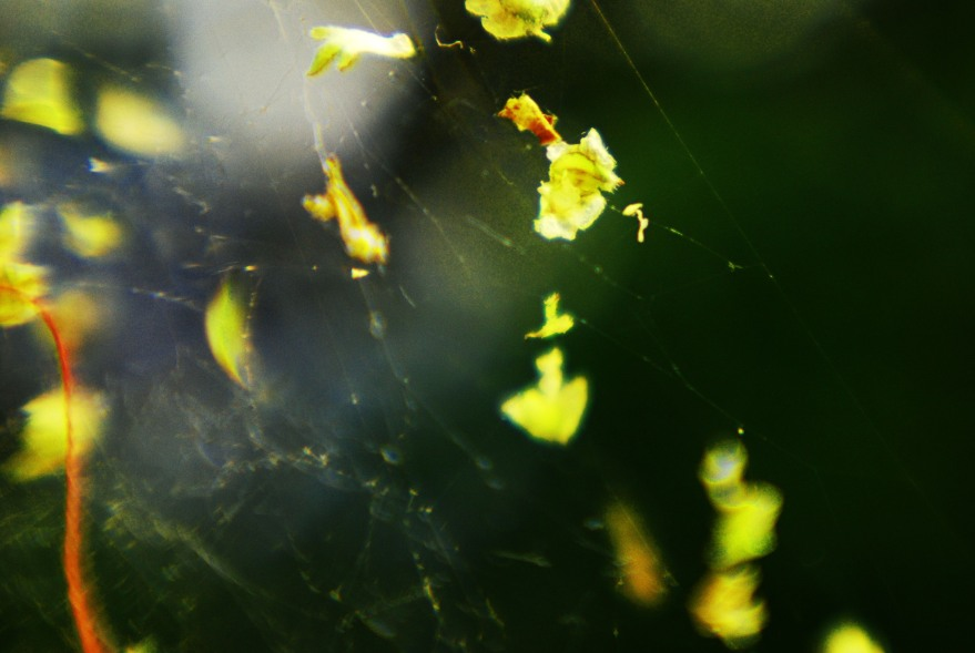 cobweb-green