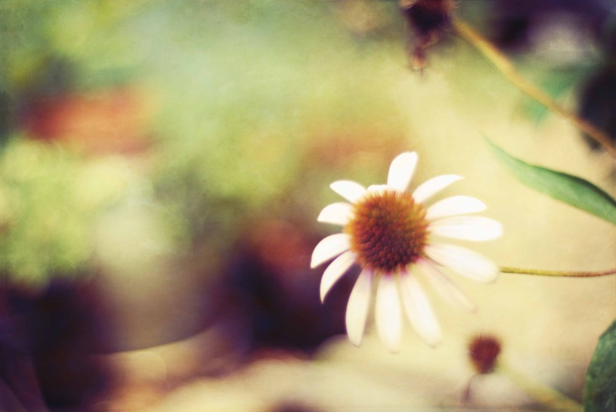 Soft Focu Flower