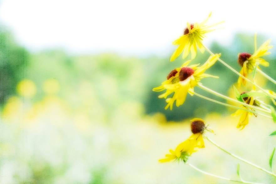 yellow flowers & bokeh