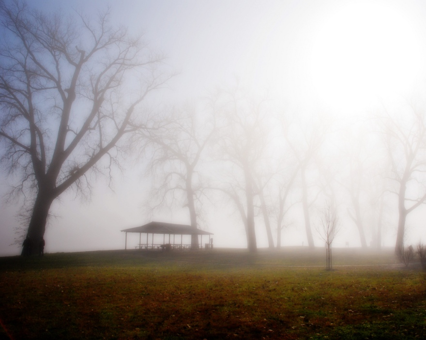 foggy river park