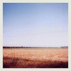 sm field