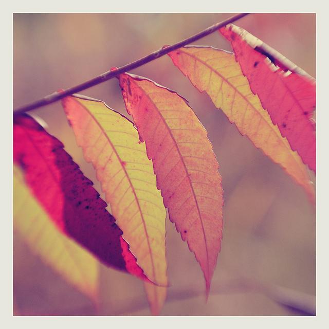 6 autumn leaves