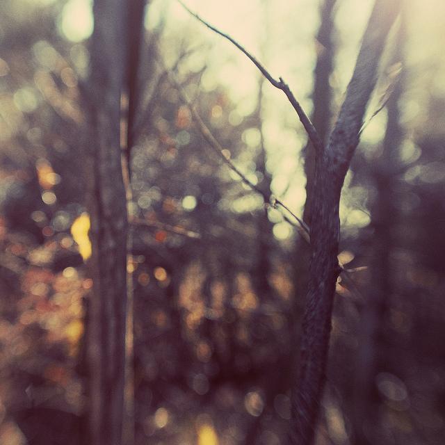 woods bokeh