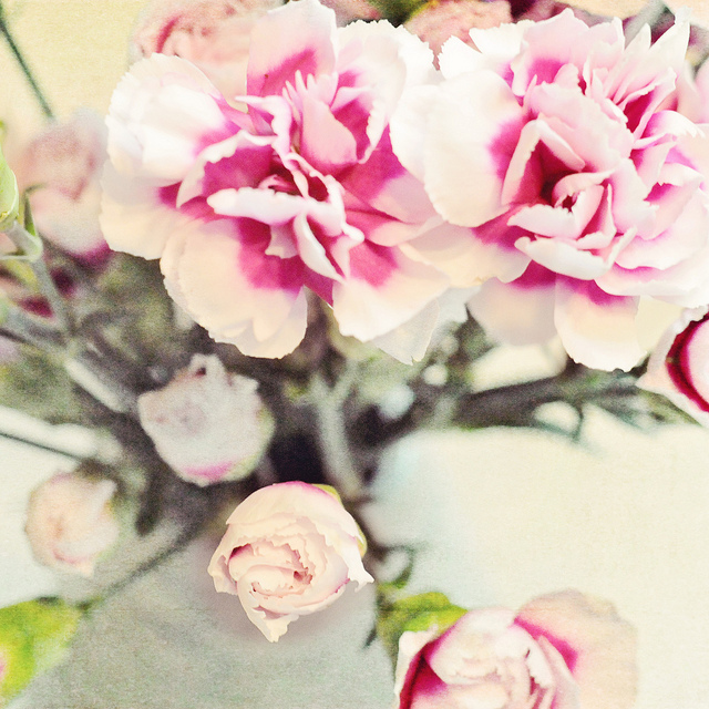 textured pink roses