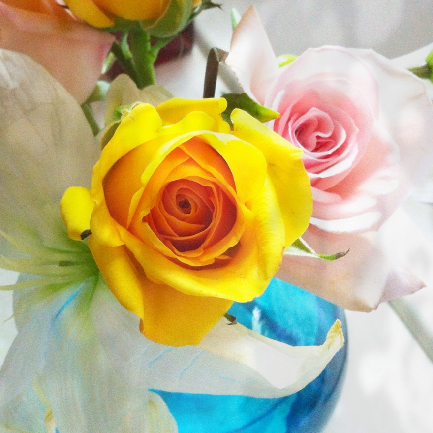 cut roses
