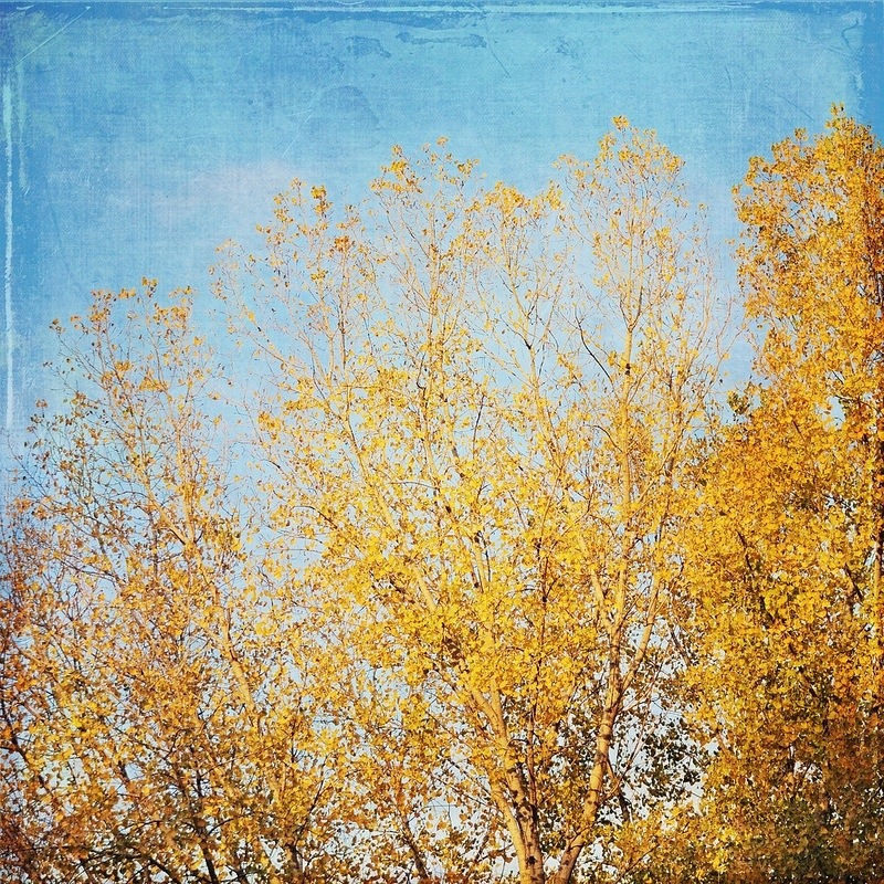Orange Autumn Tree gallery32 etsy phot wall decor