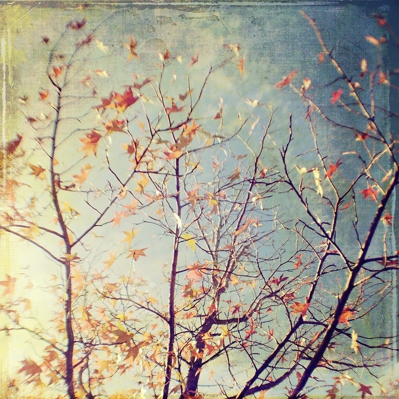 Orange Autumn tree Gallery32 etsy photo
