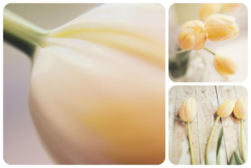yellow tulips Trina Baker Photography