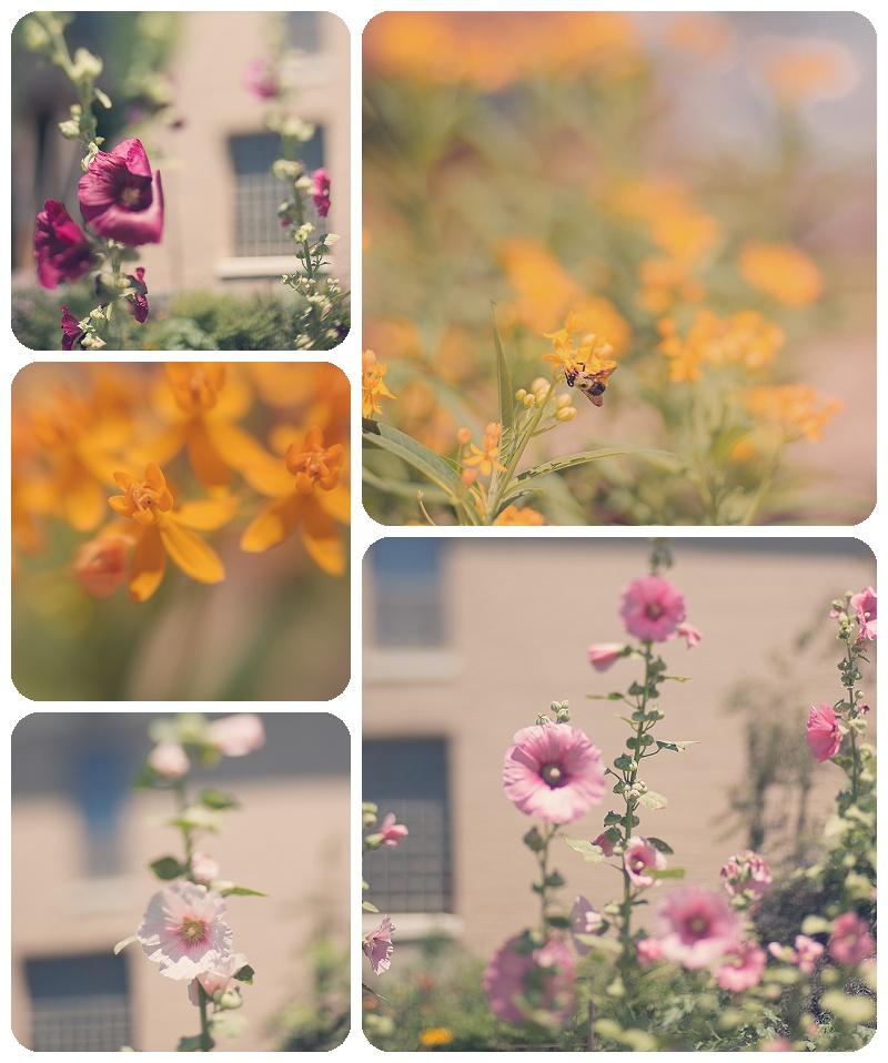 Butterfly Garden Gallery32 etsy