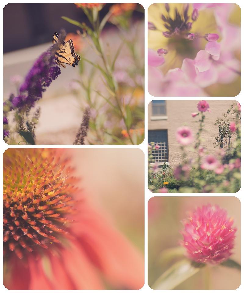 Butterfly Garden Gallery32 etsys shop