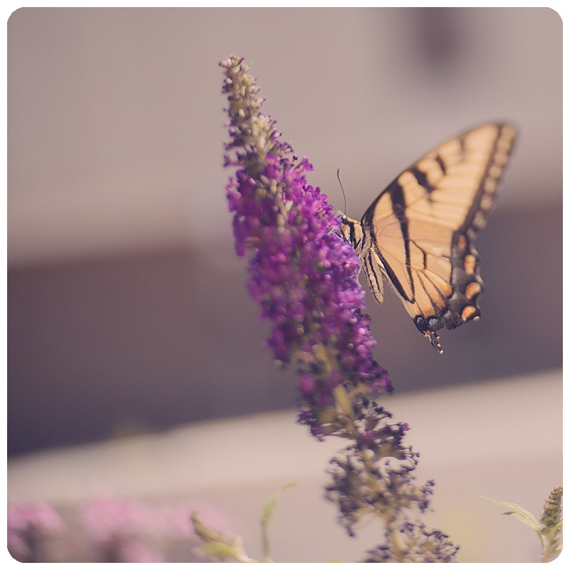 Butterfly Garden Gallery32etsy