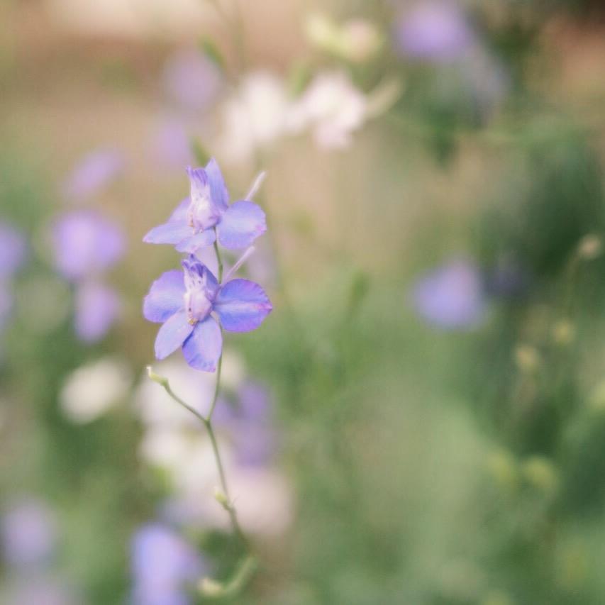 flowers trina baker lawrence kansas photographer