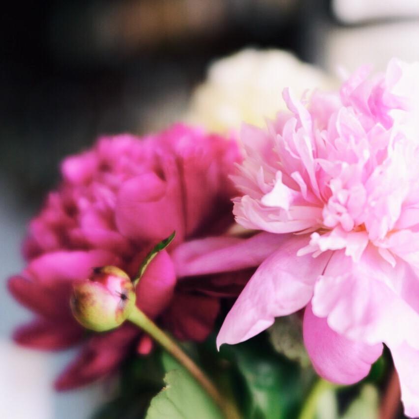 pink peonies trina baker photography