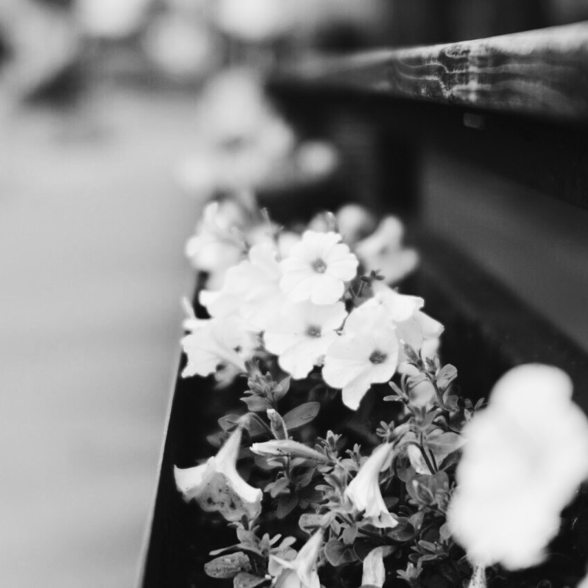 black and white flowers trina baker portaits