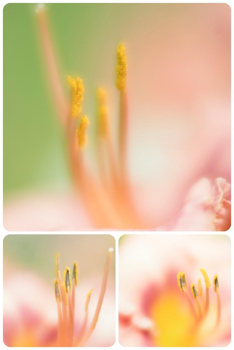 Trina Baker Photography Portrait Photographer Kansas Pink Lily