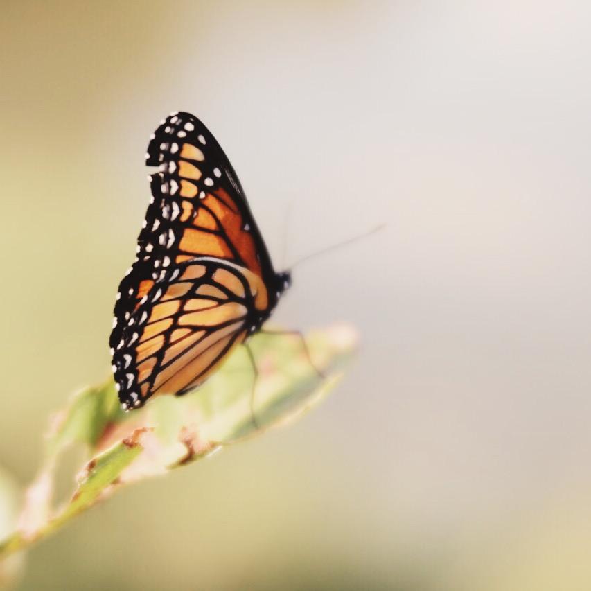 Butterfly Trina Baker
